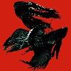 Selim--Yildirim's avatar