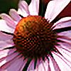 Seluias-stock's avatar