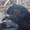 Semichuck's avatar