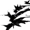 Seraph-Wing's avatar