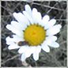 serenebean's avatar