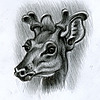serg's avatar