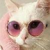 Servalcult's avatar