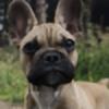 SET07's avatar