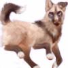 SG-Sage's avatar