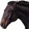 Shaareen's avatar
