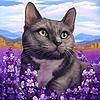 ShadowsGrimm's avatar