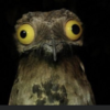 shadowsheartbeat's avatar