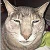 shadowthehedgehog202's avatar