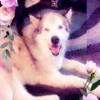 ShadowWolfWoods's avatar