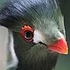 ShakingFlamme's avatar