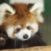 shaktikannon's avatar