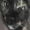 shamankaro's avatar