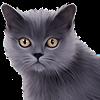 SharkyDylan2008's avatar