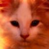 shashahaqifaify's avatar