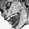 SheiFlema's avatar