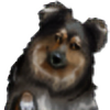 Sheltiegirl17's avatar