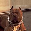 sheppi72's avatar