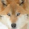 SherlockHolmes90's avatar