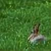 sheweasel03's avatar