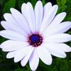shireen41425's avatar