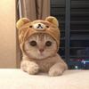 ShiroOwO1001's avatar