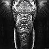 Shiveren's avatar
