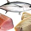 Shoganaii1's avatar