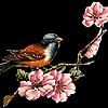 shortcakeemoji's avatar