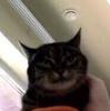 Shsqqeaa's avatar