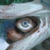 SiaTheSquidQueen's avatar