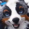 siekfried's avatar