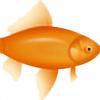 siena8's avatar