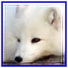 Sigmund-SL's avatar