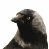 SilkBolete's avatar