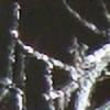 Silph07's avatar
