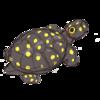 silverdragon76's avatar