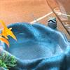 silverforestdragons2's avatar
