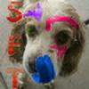 SilverFoxThief's avatar