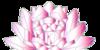 silverstarAantifan's avatar