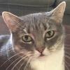 silverthefox364's avatar