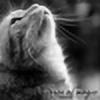 Silvery-DropCat's avatar