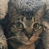 SimbaCatLover's avatar