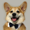 simoonnn's avatar