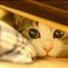 simzcom's avatar