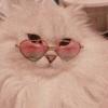 Sinalaa's avatar