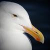 SirLarus's avatar