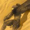 siulziradnemra's avatar