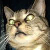 sjohnsontg's avatar