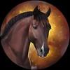 Skrivaa's avatar